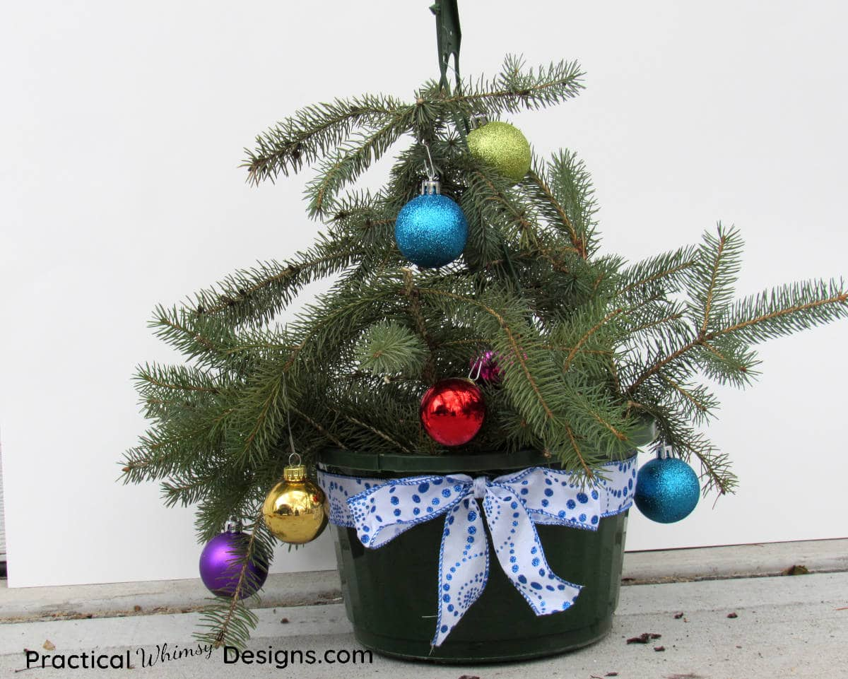 Decorated pine boughs in hanging basket