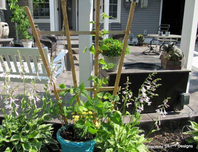 Easy Garden Trellis by patio