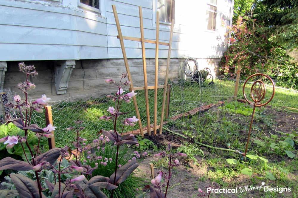Garden trellis in garden