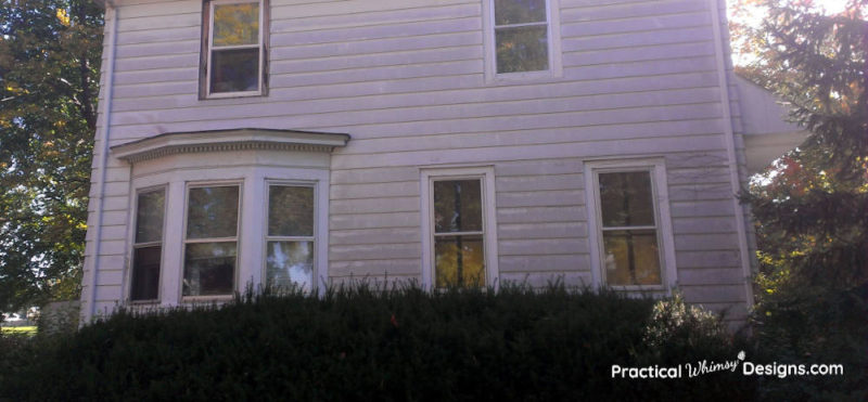 Large bushes on the side of the house